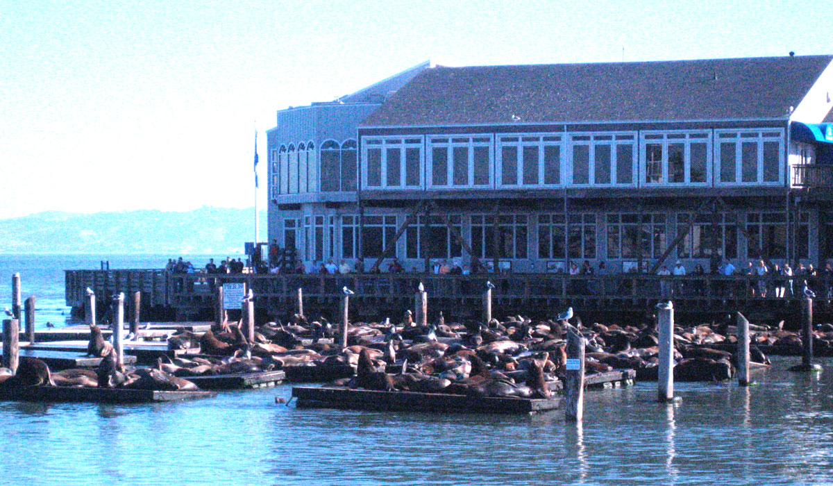 san-francisco-sea-lions_001